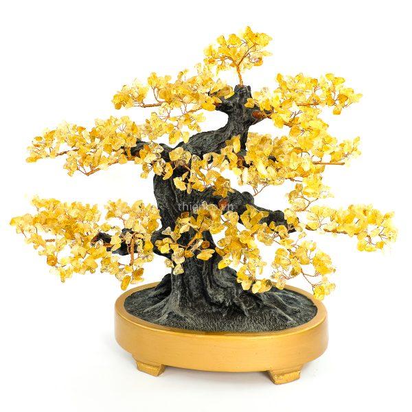 cay tai loc may man bonsai da thach anh vang